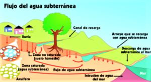 Acuífero » Qué es, características, cómo se forma, tipos, fauna, flora, importancia