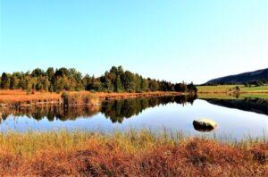 Pantano » Qué es, características, cómo se forma, tipos, fauna, flora