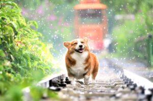 Perro » Qué es, características, qué come, comportamiento, razas, taxonomía